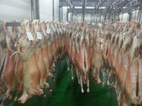 "LAMB CARCASSES form SPAIN (""AAA"" Quality) baby lamb, suckling lamb, older sheep..)"