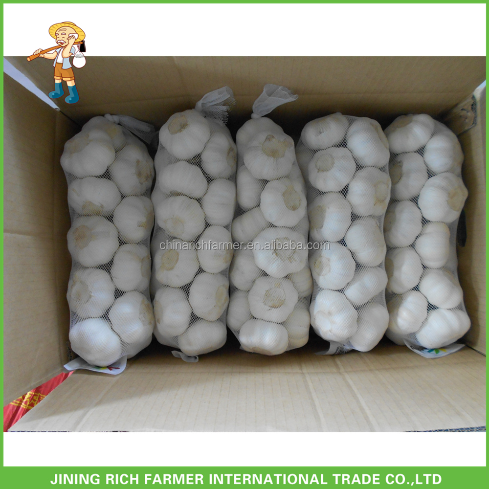 Offer Chinese Natural Fresh Super White Garlic