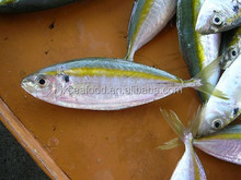 frozen yellow stripe scad trevally