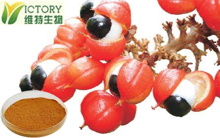 Factory supply 100% pure nature 22% guarana herb extract powder
