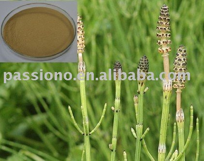 Natural Horsetail Extract 7%Min.silica acid Brown Gray Fine Powder, Herbal extract