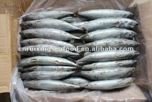 NO pasty meat bonito fish from china sea