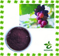 Top Quality pure natural Grape Skin Extract Powder