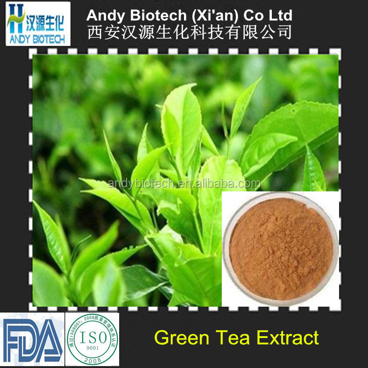Water soluble green tea extract,tea polyphenol 50%,90%,95% 98% HPLC