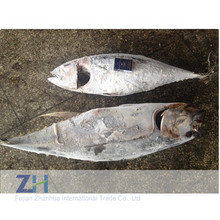 Wholesale seafood whole yellowfin tuna price