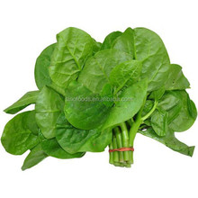 100% pure high germination rate dry seeds mu er cai seeds of Malabar spinach