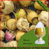 High quality Maca Extract In Coffee