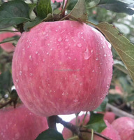 Scientific Name Of All Fruits Red Fuji Apple From China