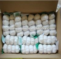 2013 china jinxiang garlic price