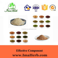 Top Grade Kosher Approved saffron dubai