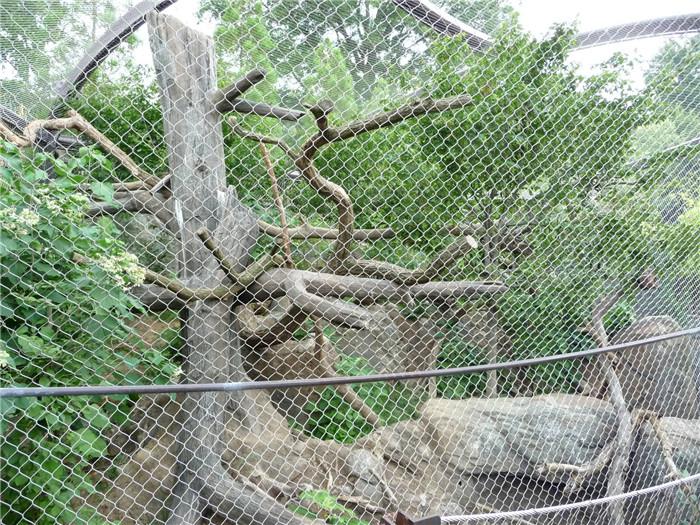 stainless steel rope mesh117
