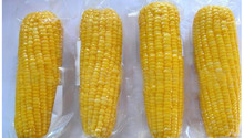 High quality Yellow Sweet Corn vacuum packed sweet corn