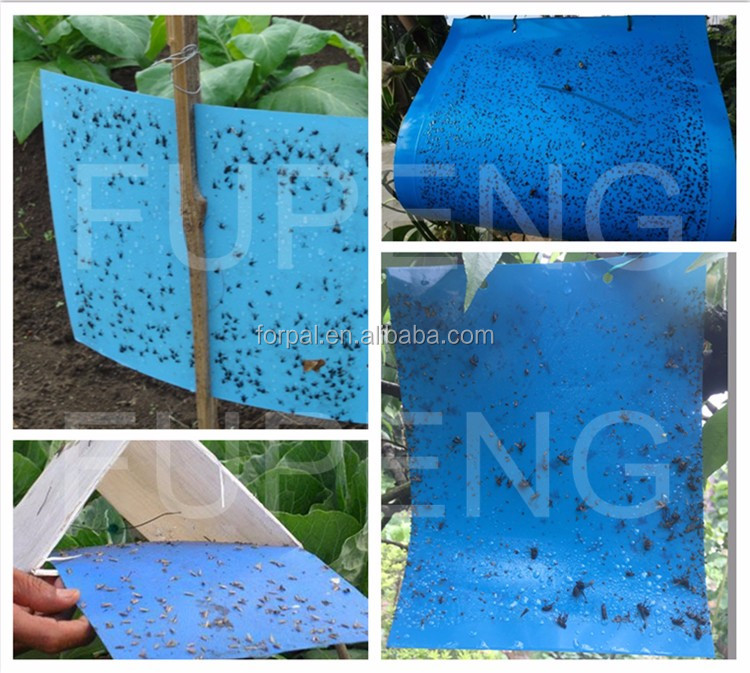 Fupeng Reduce Pollution Blue Sticky Trap