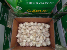 Natural Garlic with Good Quality in China