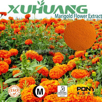 Free Sample Top Quality Marigold Flower extract powder in bulk
