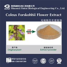 coleus forskolin 98% forskohlii flower extract powder