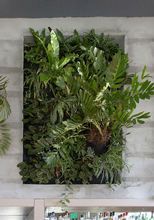 Indoor & outdoor greenwall system plant pot covers