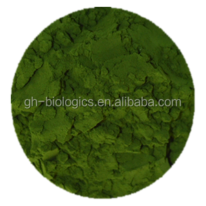 Natural Chlorella Powder Organic In Bulk