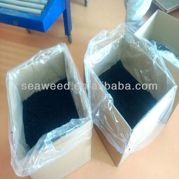 whole sale bulk seaweed