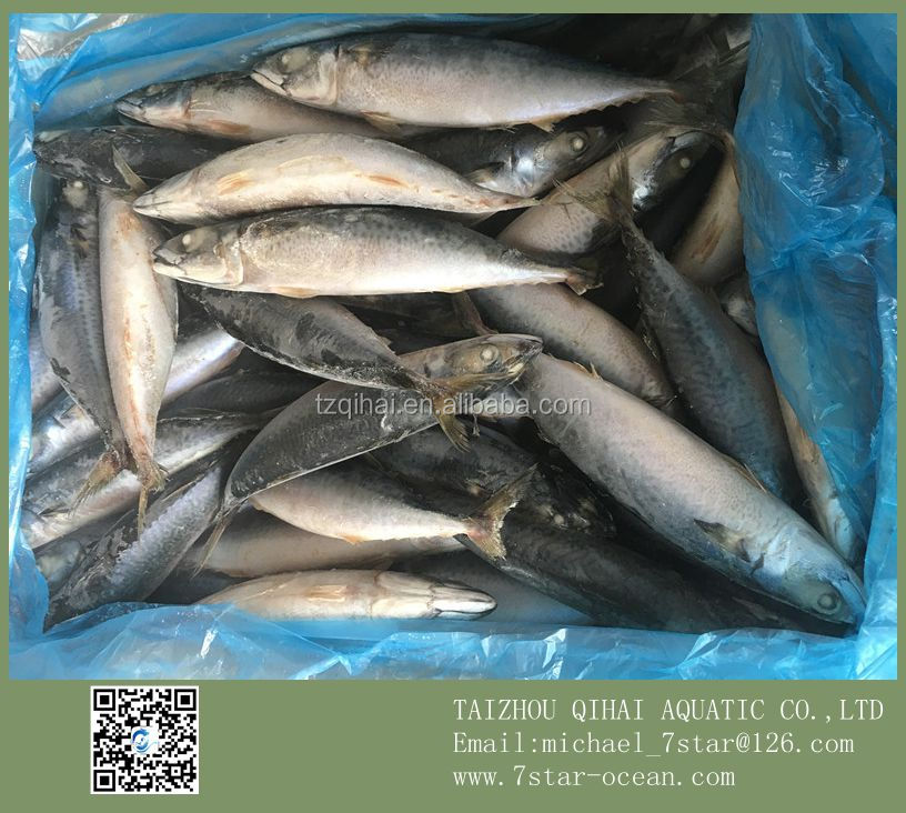 Fishing For All Mackerel Fish Nutrition 15kg 250-350g/pc