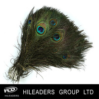 FH450 Natural Color 25-30cm Peacock Feather With Eyes