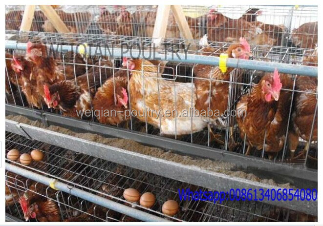 High Quality Automatic Poultry Layer Cages/Design Layer Chicken Cages/layer chicken battery cage (professional factory)