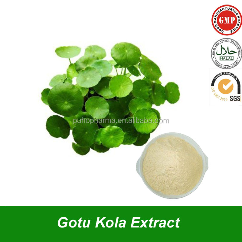 Pure Natural Gotu Kola Leaf Extract Herba Centellae extract with Asiaticoside & Total Triterpenes For Supplement Ingredient