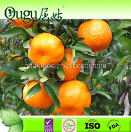 2016 Sweet Fresh mandarin orange/Fresh Orange,Naval Orange,Valencia Oranges