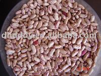 long type light speckled kidney bean