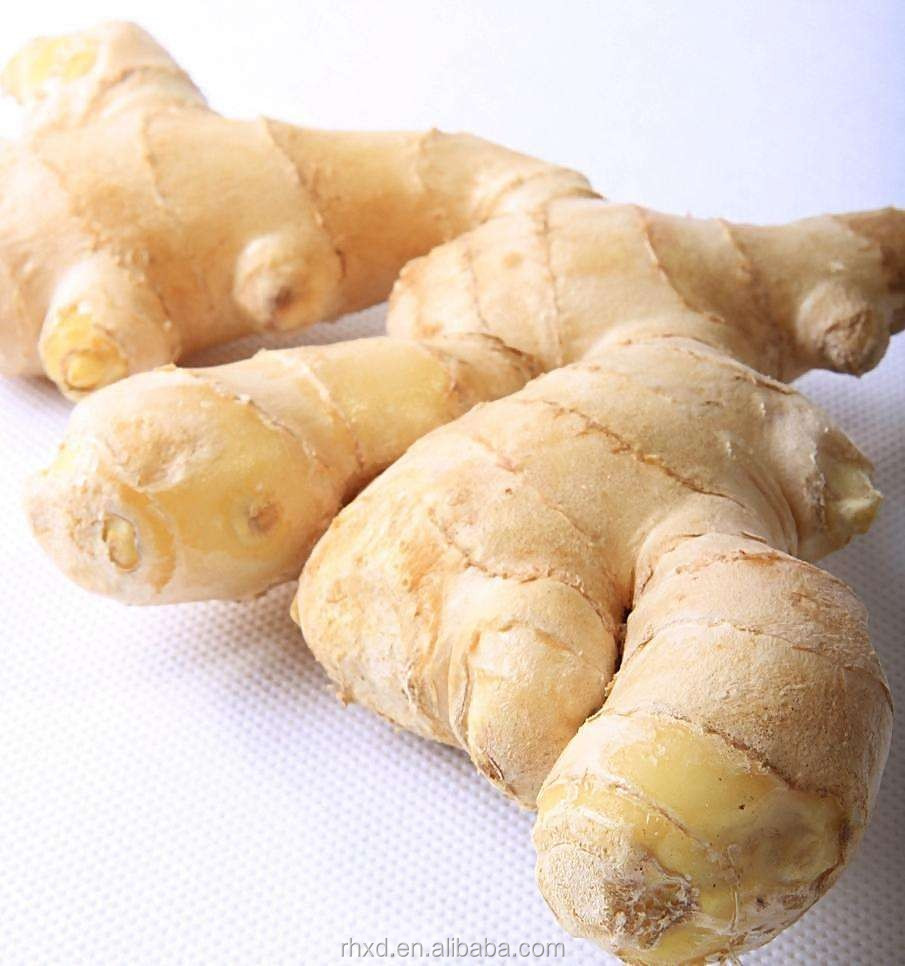 agricultural crops fresh ginger for exporting sale