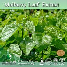 100% Pure Mulberry Leaves Extract Powder,Mulberry Leaves Extract 1-DNJ 1%~10%(CAS No: 19130-96-2)