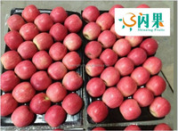 2015 China Local fruit fresh fuji apples for sale with Wholesale Price