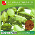 Manufacturer Supply Cardamon Extract Powder