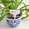 152mm Biodegradable Gardening Use Plant Labels