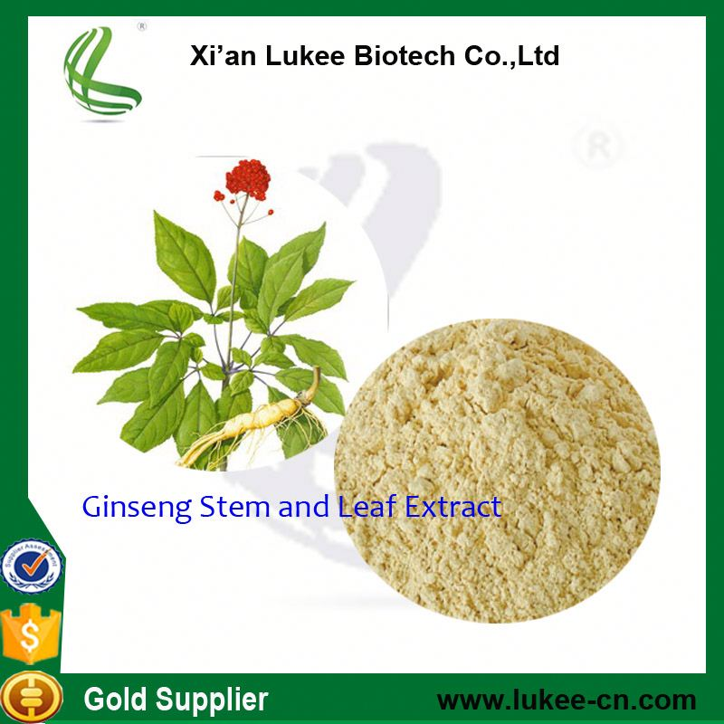 100% soluble in water ginsenosides panax ginseng leaves extract