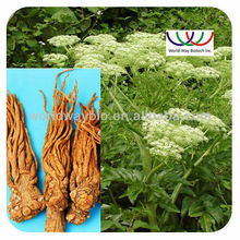 Angelica Root extract/ Dong Quai oil extract/ Ligustilides/100% natural herb medicine