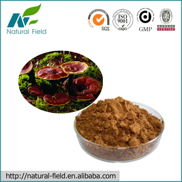 Manufacturer Supply Pure Natural Reishi Mushroom Extract