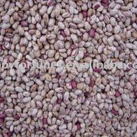 Cranberry Beans Light Speckled Kidney Beans