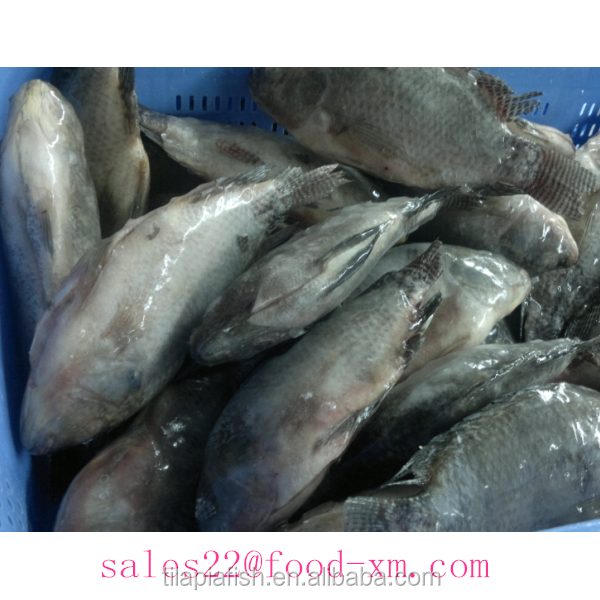 seafood manufacture sell live tilapia