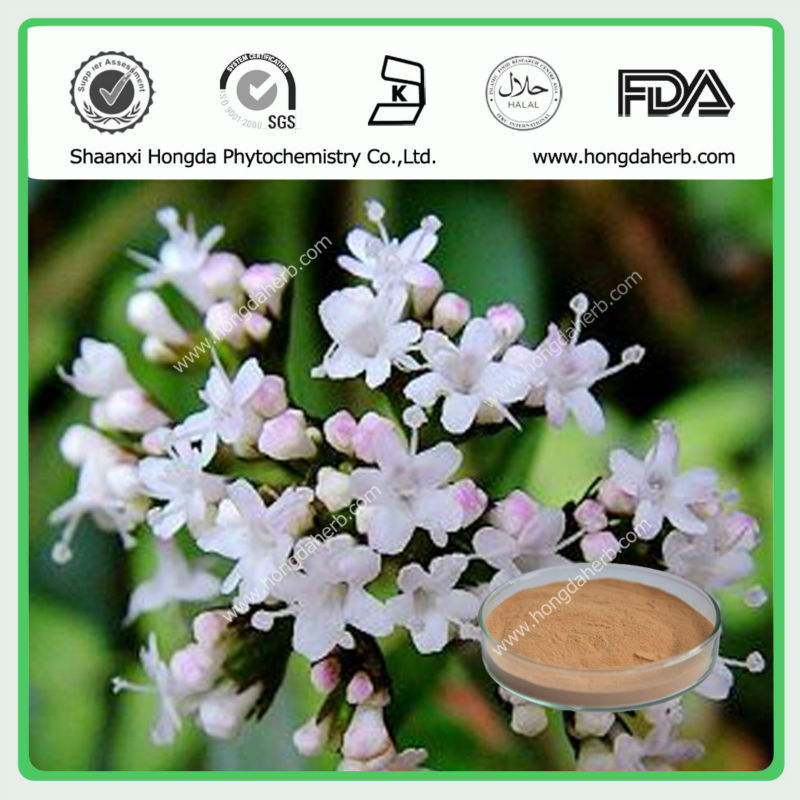 Free Sample Valerienic Root Extract Powder Valerienic Acid 0.8%