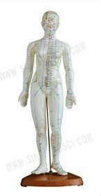 SF-504 Acupuncture Model 48CM Female
