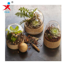 mouth blown clear glass airplant terrariums /wooden terrarium