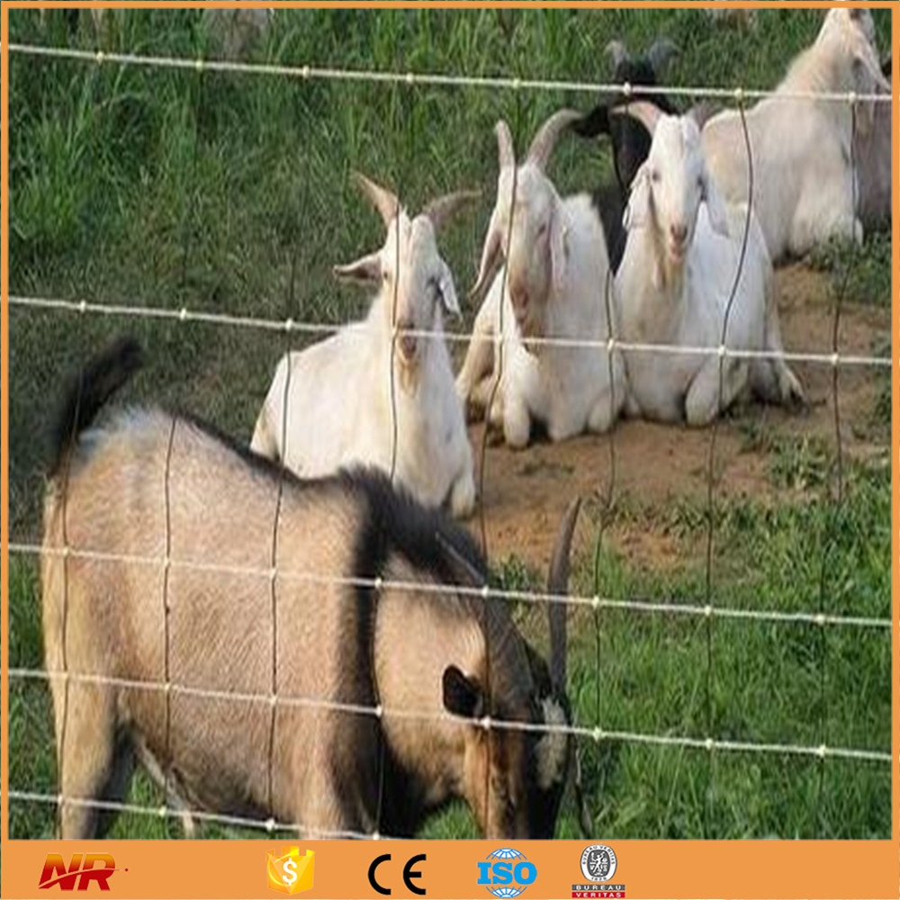 Direct Factory Cheap Field Fences Hog Wire