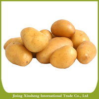 High quality fresh potato from China