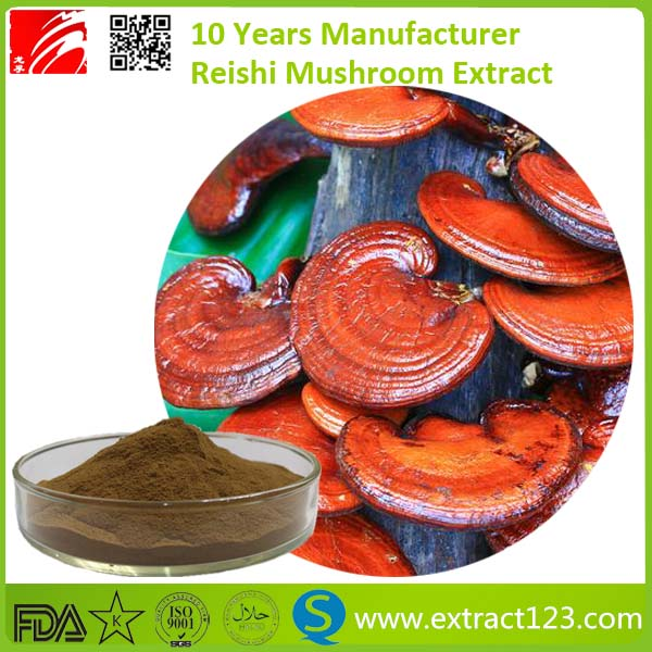 pure natural & high quality competitive price reishi mushroom extract triterpene