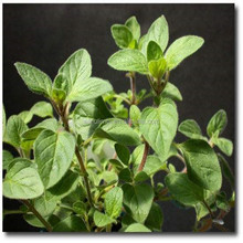 Oregano phenol extraction of essential oil in chicken feed,antibacterial powder