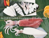 Cephalopods Seafood Fresh Squid