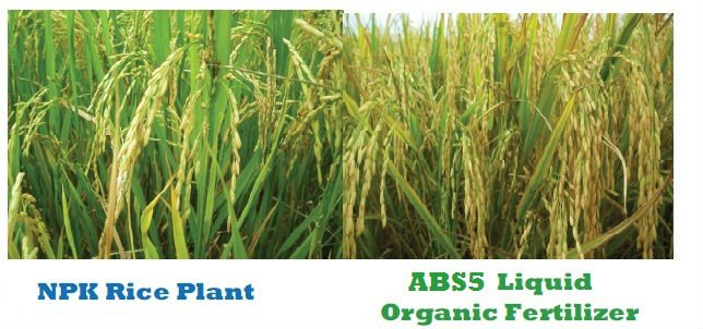 ABS 5 BIO FERTILIZER