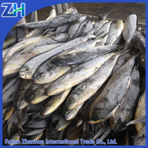 1.5kg up sea frozen Mahi Mahi fish for sale
