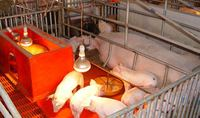Pig farming Equipment/farrowing crates for sale